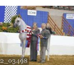 2015 region 12 open champion gelding